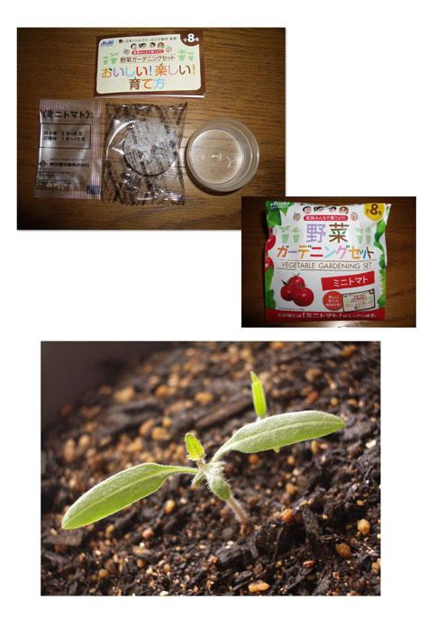 ミニトマト01.jpg