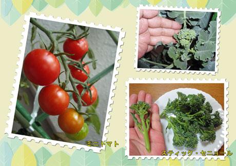 菜園2009-01.jpg